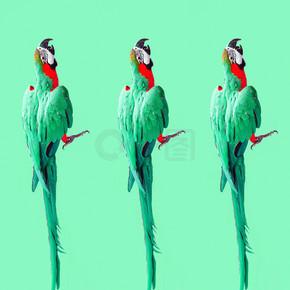 疯狂的流行艺术五颜六色的紫外线壁纸与阿拉鹦鹉(照片)现代模式