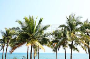 在三亚海边椰树