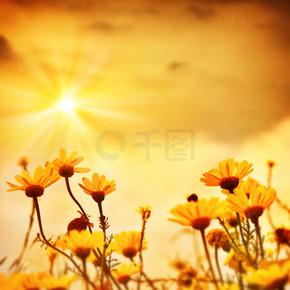 květiny nad teplé slunce在温暖的夕阳花
