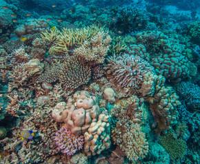 健康的珊瑚礁