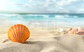 海滩上的贝壳