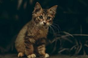 美丽可爱的蓬松猫