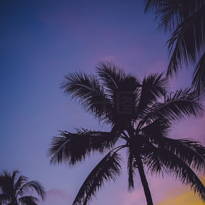 紫色的天空老式的棕榈树在夏威夷