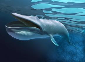鲸鱼在水下游泳.