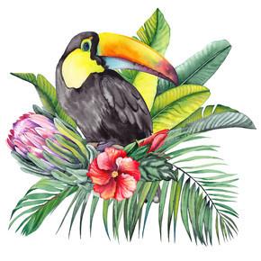 图坎鸟与异国情调的原茶花,木薯,棕榈和香蕉叶。白色背景上的水彩.