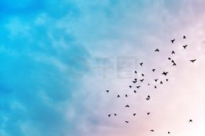天空中的小鸟.