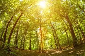 在树林中,添加的漏光效果与树木的鱼眼镜头