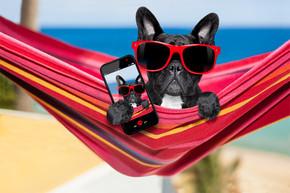 狗在夏季里的吊床上