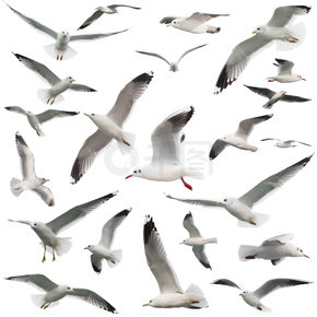 鸟设置隔离