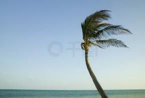 Palme im Wind in den Florida keys