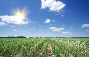 苹果幼园和蓝色天空的视图.