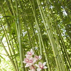 竹茎和兰花