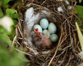 刚孵出的幼鸟