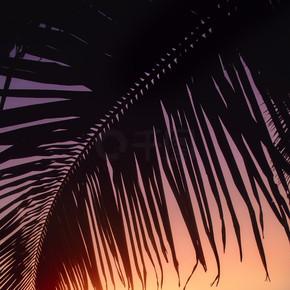 棕榈树下的独岛船