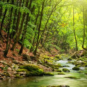 河在山地森林深处
