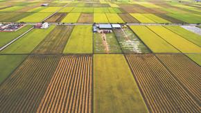 空中照片从飞行无人机的农场建筑在农村附近的绿色领域与播种的土地与谷物.
