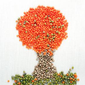 由小扁豆和绿豆的一棵树