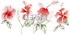 野花玫瑰一朵在孤立的水彩风格.
