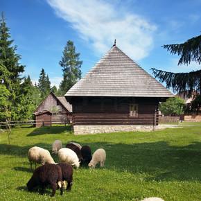 民俗家在 pribylina 附近的羊