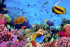 珊瑚殖民地上的礁石,埃及的照片