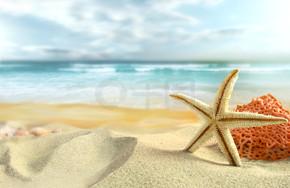 海滩上的海星