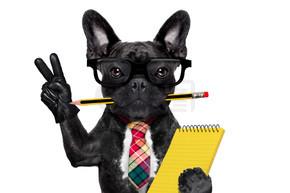 办公室工作人员的狗