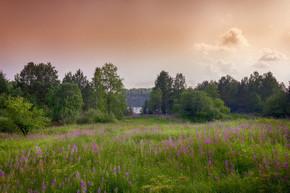 夏草园景观,绿草和野花背景的森林.