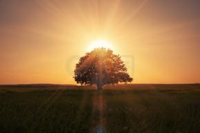 神奇日出与树