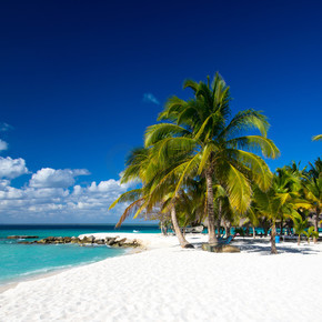 海滩和棕榈