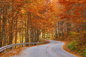 沥青路通过五颜六色的森林