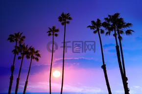 加州高棕榈树落日的天空 silohuette 背景美国