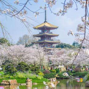 武汉樱花花园春天的风景