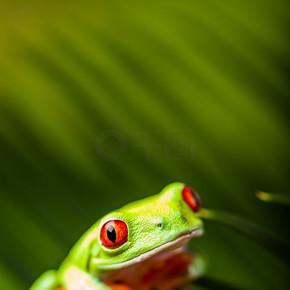 美好的外来青蛙,热带风情为主题