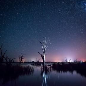 在一棵枯树的夜空