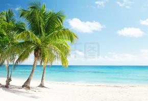 加勒比海和椰子树
