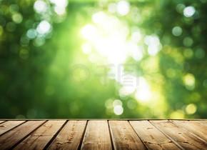 木制表面和阳光明媚的森林