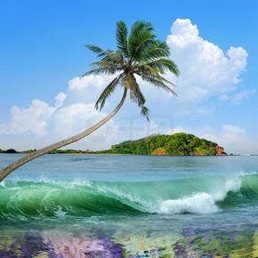 棕榈树的美丽岛屿
