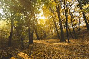 美丽的秋天森林