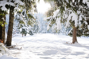 冬季美景树和雪
