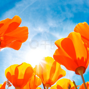 充满活力的七彩花朵