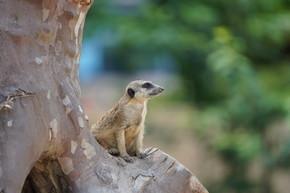 鹅在树上坐着,在野生动植物中看着