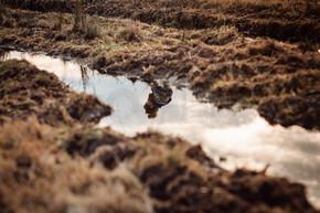 一个孤独的女子在田里走