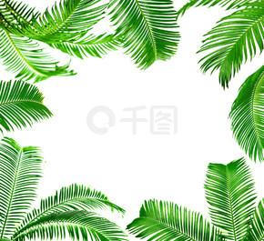 框架的绿色的棕榈叶