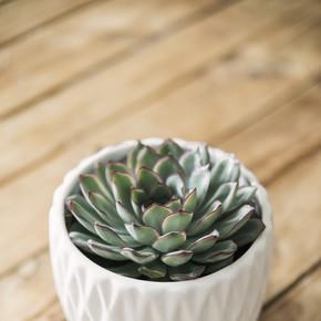 木桌上白色设计锅中的多汁器特写。家居内饰的时尚和植物性组合.