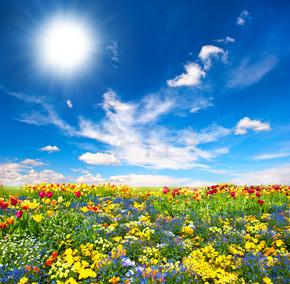 花床。七彩花朵在蓝蓝的天空