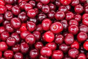 背景下的红樱桃果