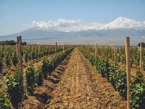 排灌木在农业领域与山在背景上, 亚美尼亚