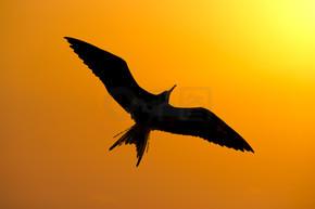 鸟的剪影日落