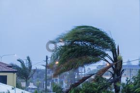 棕榈树在风中