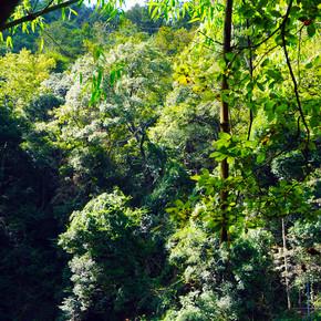 荔波景区旅拍——绿植青水